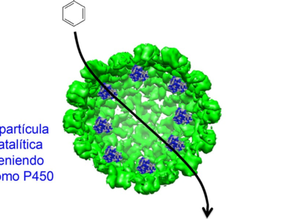 nanopartícula biocatalítica conteniendo citocromo p450