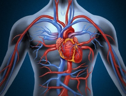 Oligopéptidos para evitar el desarrollo de enfermedades vasculares